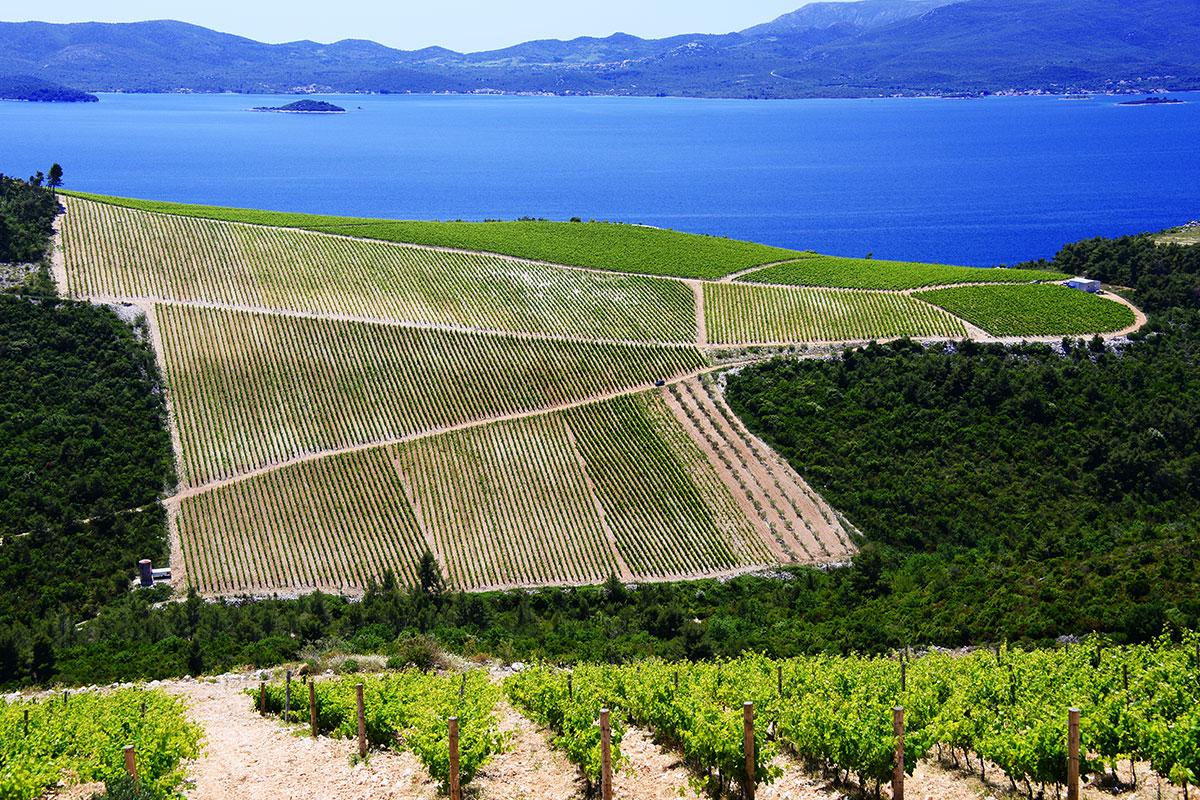 Croatian wine on the rise